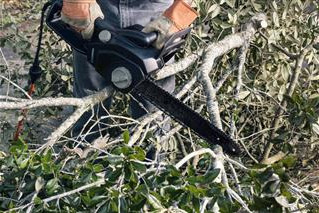 QUESTIONS TO ASK YOUR TREE REMOVAL COMPANY