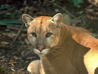 Florida Panthers on the Rise