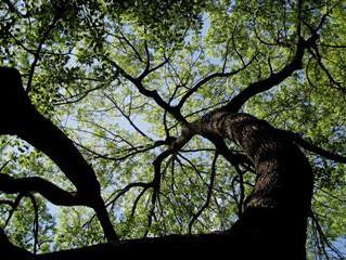 DO I NEED PROFESSIONAL TREE SERVICES?