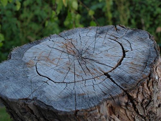 TIPS FROM A TREE STUMP REMOVAL COMPANY