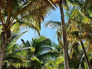 TREE TRIMMING: TAKING CARE OF YOUR PALM TREES
