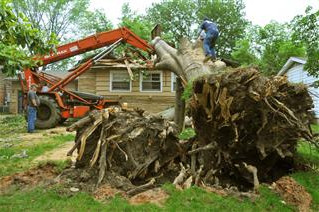 TREE REMOVAL: HOW TO PREPARE
