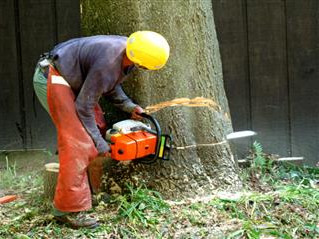 CALL A TREE REMOVAL COMPANY WHEN YOU NEED HELP
