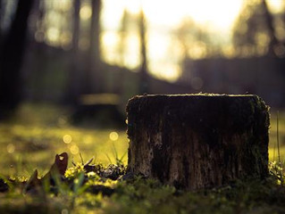 STUMPED BY THE STUMP: WHEN YOU NEED TREE STUMP REMOVAL