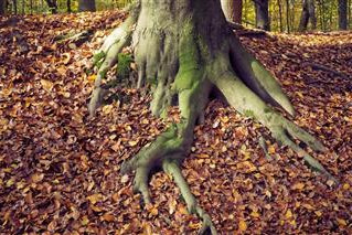 WHAT TO DO WHEN TREE ROOTS ARE A NUISANCE