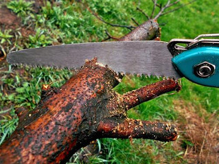 TREE TRIMMING SERVICES: HIRE PROFESSIONALS OR DIY?