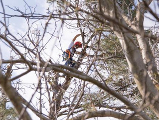 TREE SERVICES: WHEN YOU SHOULD CALL THE PROFESSIONALS