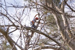 3 BENEFITS OF TREE TRIMMING SERVICES