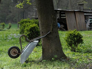 TREE SERVICES: HOW TO ACHIEVE THE PERFECT BACKYARD