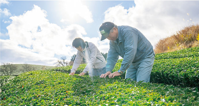 海田園黒坂製茶(岡山県美作市)