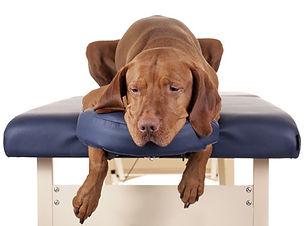 massage-canin.jpg