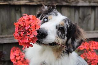 flowers-1845074_960_720.jpg