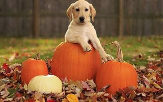 halloween-chien-640x400.jpg