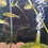 Thumbnail: キクラ オリノコエンシス コロンビア WILD  6-8センチ