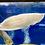 Thumbnail: アルビノシルバーアロワナ セミショート 60-65センチ 【販売中】