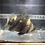 Thumbnail: ③ダトニオリアルバンド 当店育成個体 【売約済み】