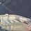 Thumbnail: エンドリケリー ステゴ体型 約60センチ 【販売中】