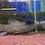 Thumbnail: ブラックタライロン 約25センチ