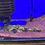 Thumbnail: バガリウスヤレリー レオパード 約22-24センチ