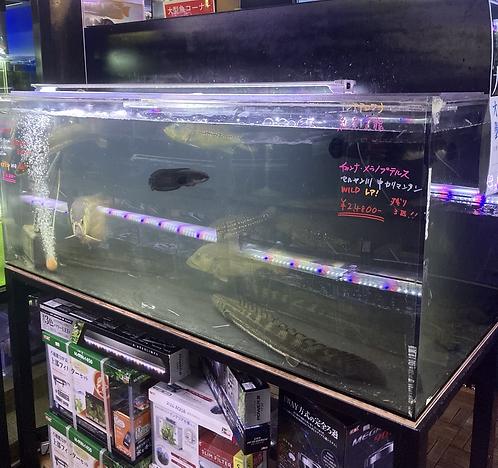 【即納】カンテツ新品アクリル水槽 1500×600×600底背面黒