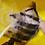 Thumbnail: ASK ダトニオプラスワン 52㎝ 座布団体型