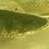 Thumbnail: ビキールビキール チャドワイルド ブラック 約69-70㎝