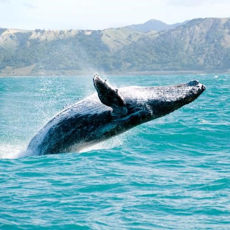 Whale Watching - AGED 16 OR OVER