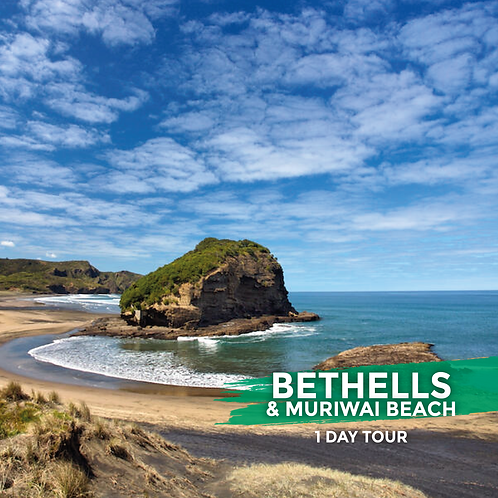 20th December | Bethells & Muriwai Beach (Day Tour)