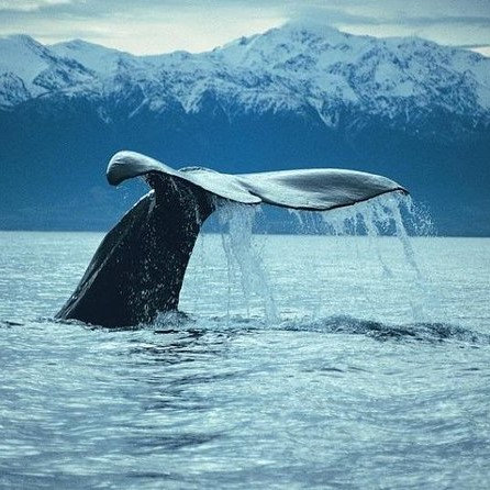 Whale Watching - AGED 15 OR UNDER