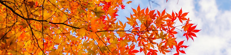 beautiful-colorful-autumn-leaves2.jpg