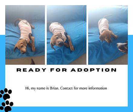 Vethoscope Adoptions-3.png