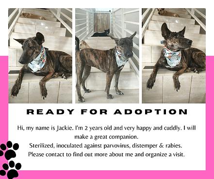 Vethoscope Adoptions-23.png