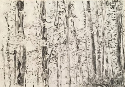 Forêt (série de 13)