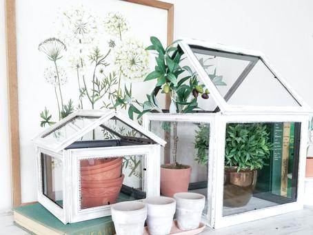 $10 And Under DIY Terrarium