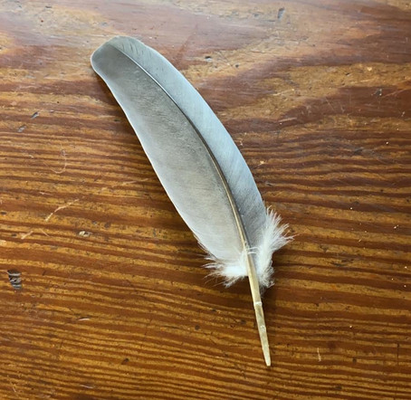 My fascination with feathers.