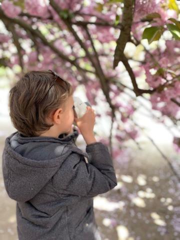 Cherry Blossoms, Camera