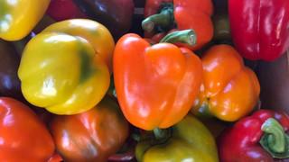 Le marché Biocancour - Des poivrons