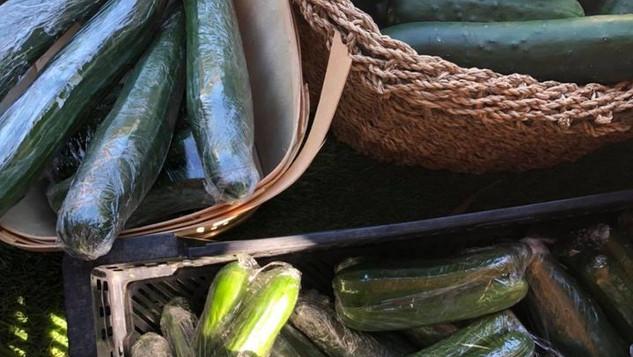 Le marché Biocancour - Des zucchinis