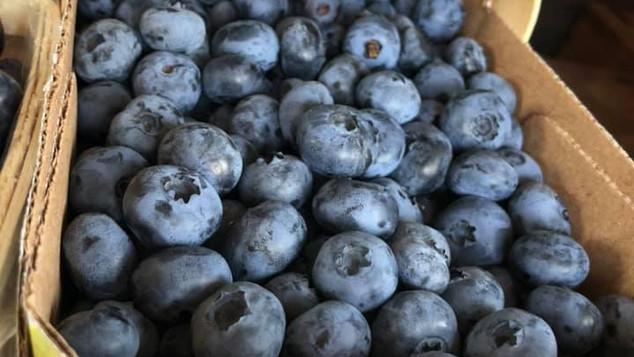 Le marché Biocancour - Des bleuets
