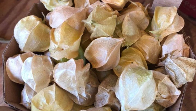 Le marché Biocancour - Des cerises de terre