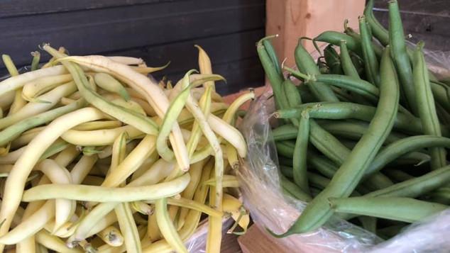 Le marché Biocancour - Des haricots verts