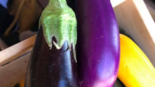 Le marché Biocancour - Des aubergines