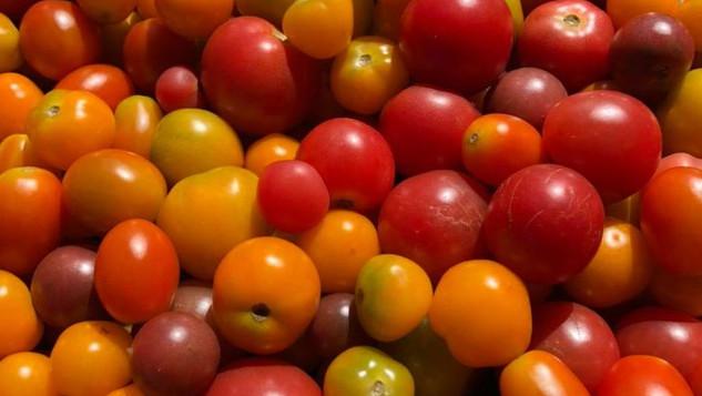 Le marché Biocancour - Des tomates
