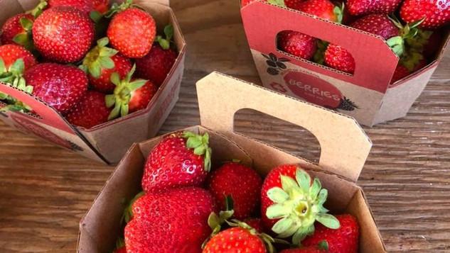 Le marché Biocancour - Des fraises