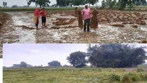 बदायूं में झमाझम बारिश से धान की फसल को  नुक्सान, रुक-रुक कर बारिश जारी
