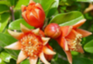 producing fruit_small.jpg