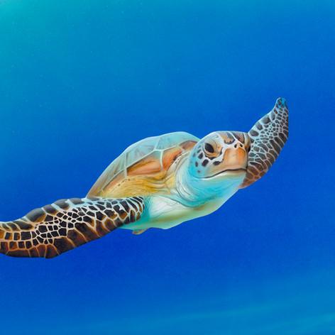 Sea Turtle in Flight