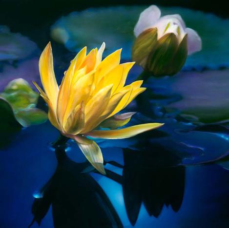 Lotus Moon