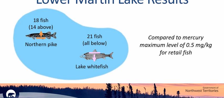 Lac Lower Martin: du mercure dans du poisson