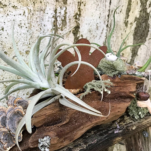 Angelic Airplants